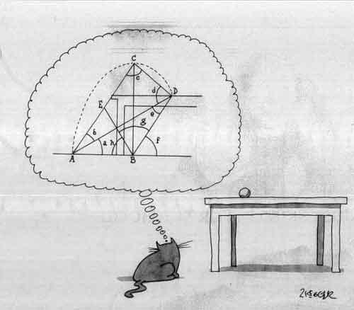 Стратегически мыслящий котяра