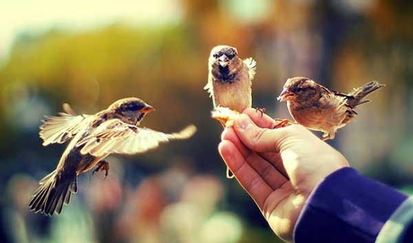Общественные блага: понятие, виды, примеры