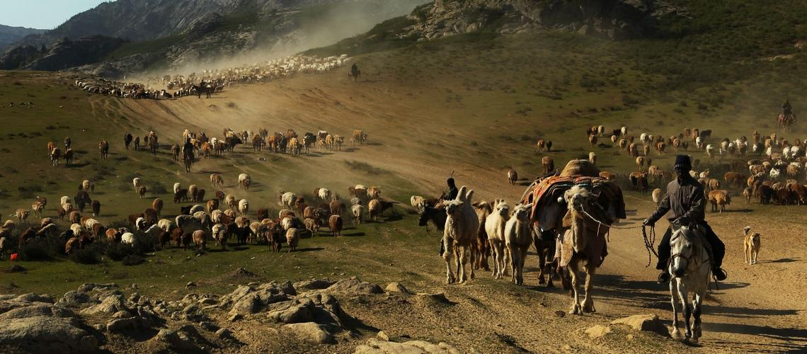 Скотоводство - производящее хозяйство